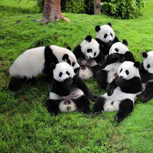 panda_main